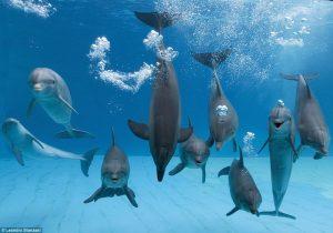 dolphinconventiononlove