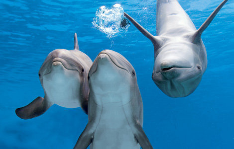 dolphinluv