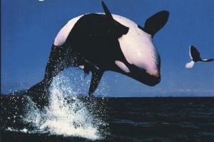 Orca&EagleShot_AwesomeShot