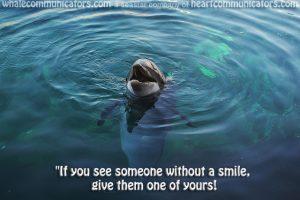 dolphinsmilepool