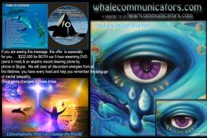 dvd-colorfull_advertisement2012_inclAkashic