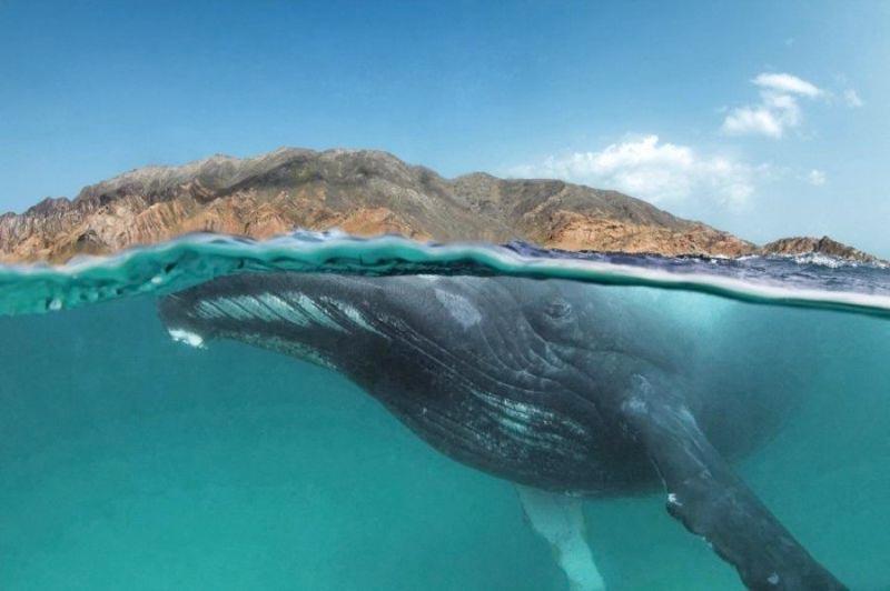 humpback-island-wowshot